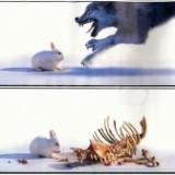 一苹兔子吃掉了狼和野猪(管理哲学)